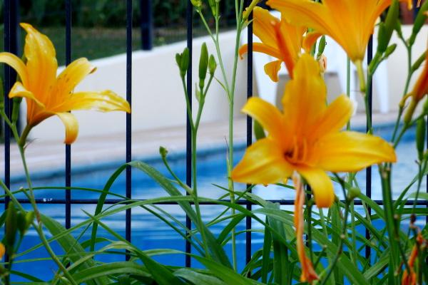 fleurs devant la piscine de l'hôtel la Tonnellerie à Tavers dans le Val de Loire