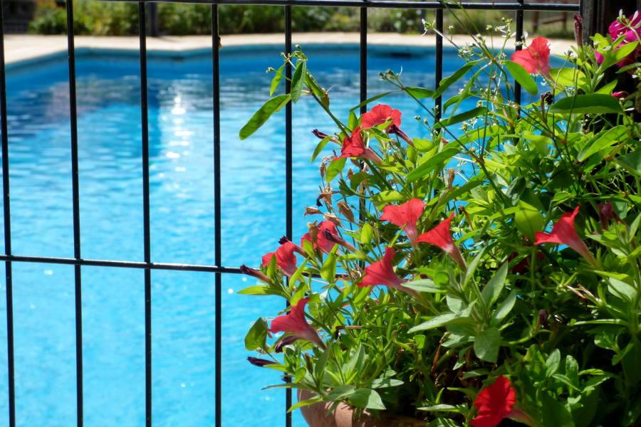 fleurs devant la piscine chauffée et sécurisée de l'hôtel la Tonnellerie dans le Val de Loire