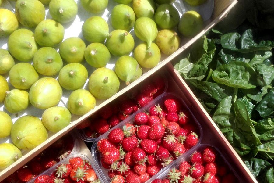 figues raises et épinards frais dans le jardin de l'hôtel la Tonnellerie de Tavers près de Beaugency