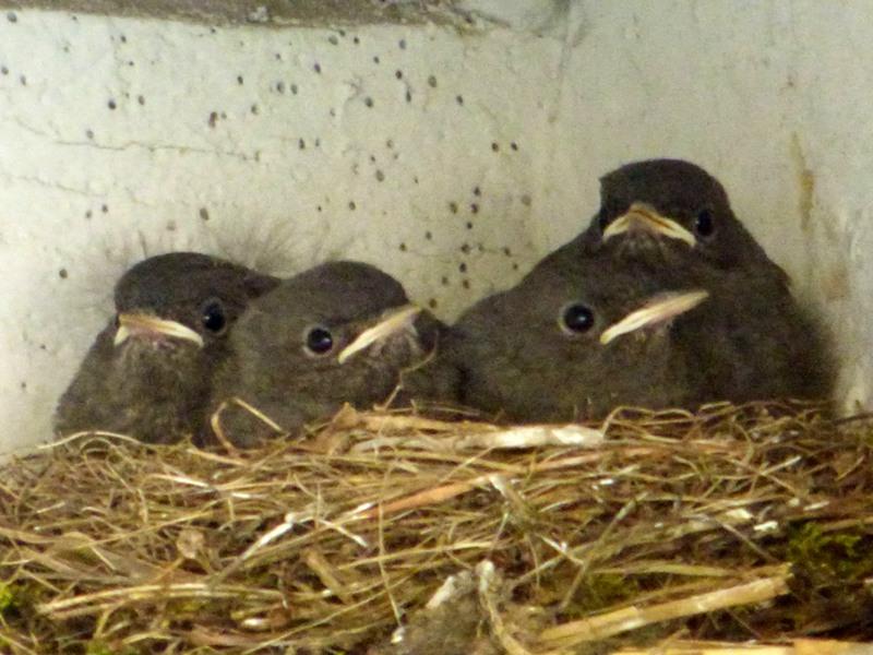 nid d'oiseaux dans la propriété de l'hotel la Tonnellerie entre Orléans et Blois