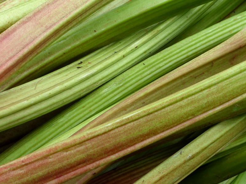 Rhubarbe bio utilisées dans les confitures de l'hotel ecolabel la Tonnellerie de Tavers dans le Loiret