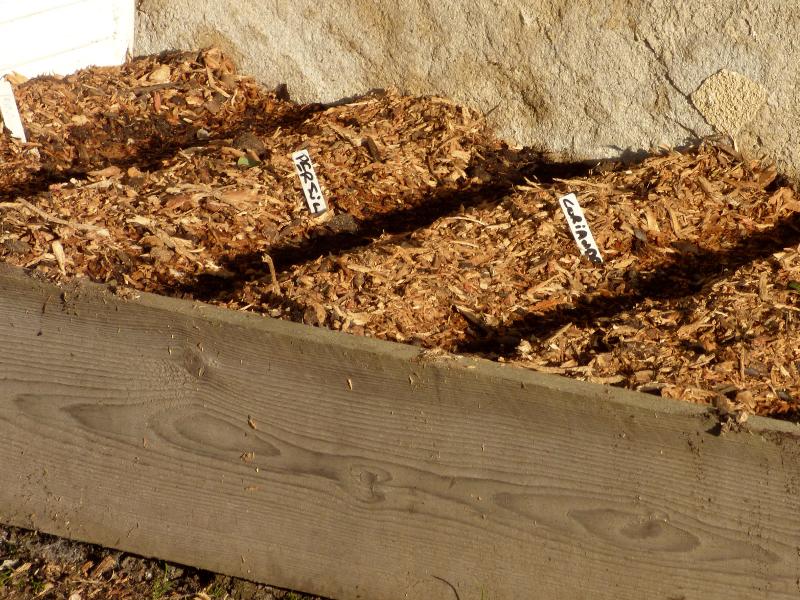 potager herbes aromatiques dans la jardin de hotel ecolabel la tonnellerie dans les chateaux de la loire