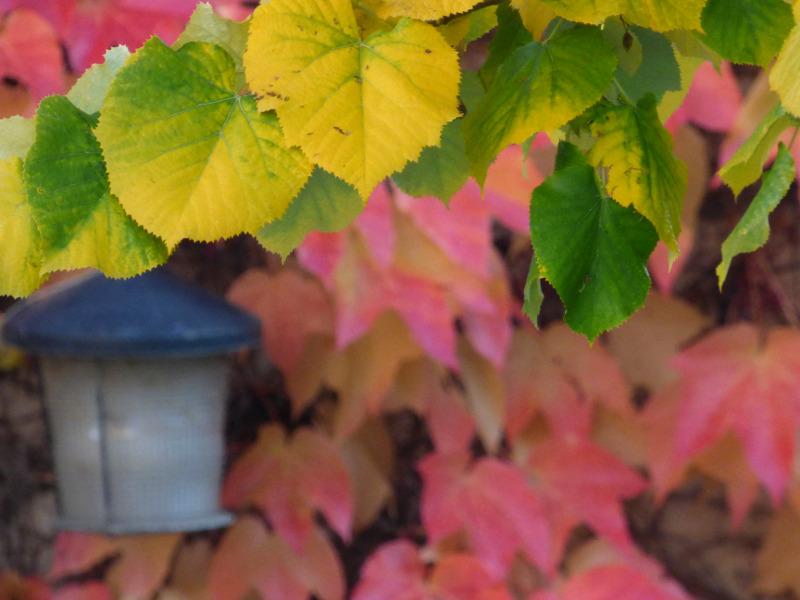 feuilles de vigne vierge sur les murs de l'hotel ecolabel la Tonnellerie entre orléans et Blois