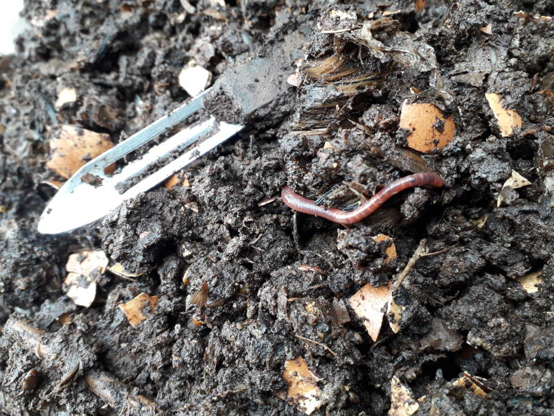 In the garden, earthworms do the work!