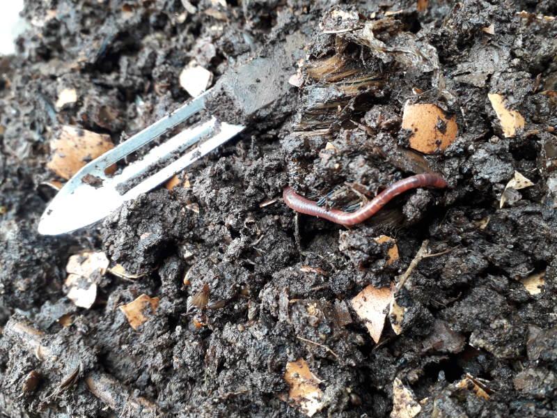 Au jardin, ce sont les vers de terre qui font le boulot!