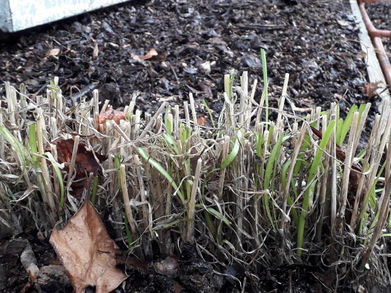 potager en permaculture pendant l'hiver à l'hotel écolabel la Tonnellerie entre Orléans et Blois