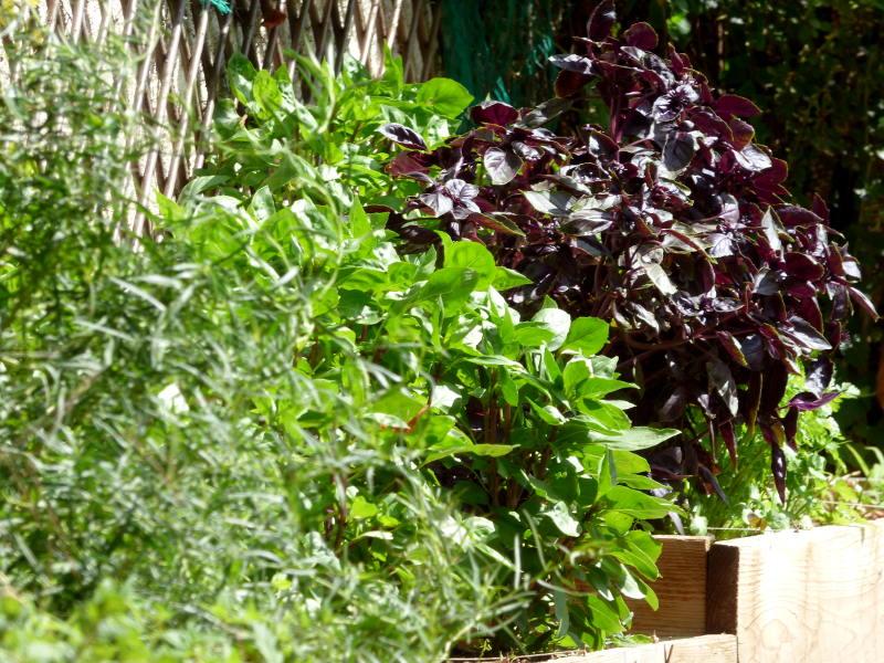 De la graine à la feuille, du jardin à l'assiette!