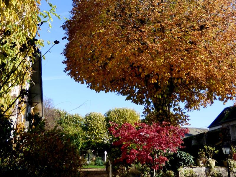 jardin de hotel la tonnellerie de Tavers près de Beaugency au milieu des chateaux de la loire