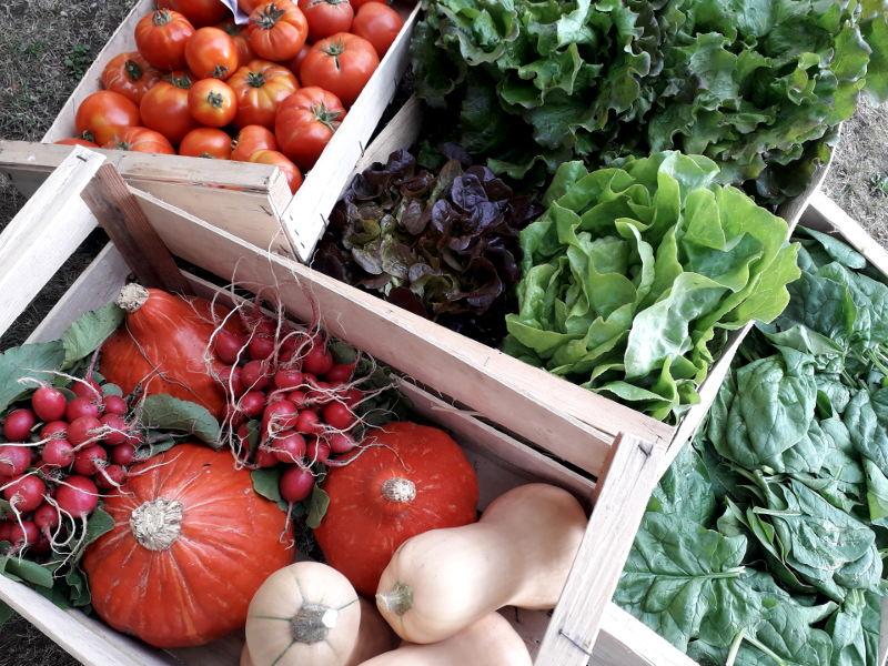 retour de marché pour l'approvisionnement en légumes bio de l'hotel la tonnellerie de Tavers
