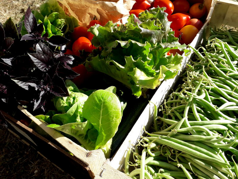 légumes bio de la ferme des Perrières dans le jardin de hotel la tonnellerie dans le Val de Loire
