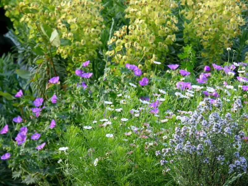 Massif de fleurs auprès de la piscine de hotel la Tonnellerie dans le Val de Loire entre Orléans et Blois