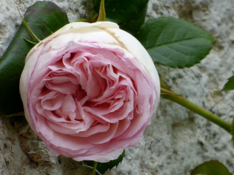Chef d'oeuvre de la nature dans le jardin de hotel ecolabel la tonnellerie dans la région des chateaux de la Loire