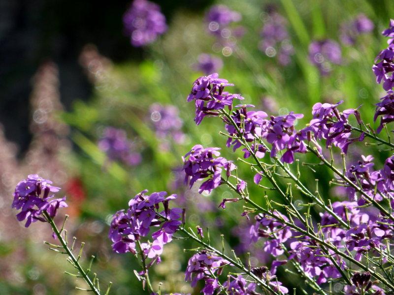 Fleurs dans le jardin de l'hôtel écolabel la Tonnellerie entre Orléans et Blois